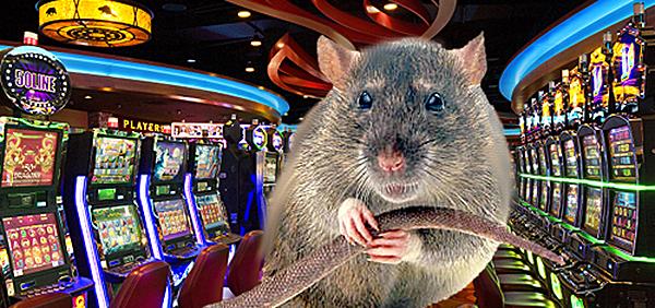 Крыса в казино